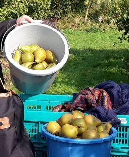peren van Loots Fruitteler